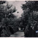 Анапа. Пляж. Аллея. 1963 год