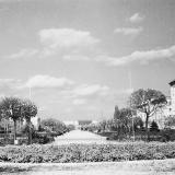 Краснодар. Аллея на ул. Красной, 1971 год.