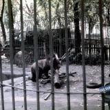 Краснодар. Городской сад - зооуголок, около 1972 года