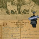 Краснодар - Полевая почта, 11.12.1945