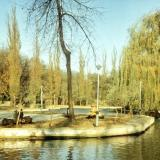 Краснодар. Пруд в горпарке, 1982 год