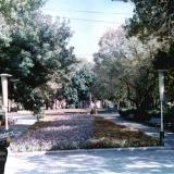 Краснодар. Сквер у Крайкома партии, 1970-е