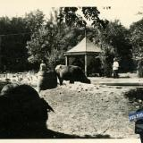 Краснодар. Во дворе 1-й городской больницы, осень 1942 года