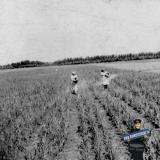 """Краснодар. Круглик 2. На месте  будущих аттракционов """"Солнечного острова"""", 1954 год"""