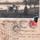 Медведовская-Екатеринодар, 05.11.1913