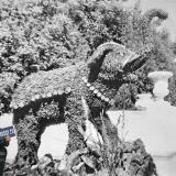 Краснодар. Слон из цветов в парке им.Горького, 1964 год