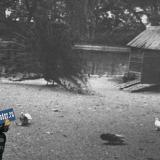 Взможно Краснодар. На пруду городского парка им. А. М. Горького