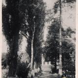 Горячий Ключ. Аллея в парке санатория № 1, 1960-е