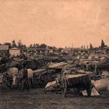 Майкоп. Лесной базар, до 1917 года
