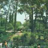 """Адлер. Парк """"Южные Культуры"""", 1981 год"""