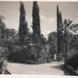 Сочи. Дендрарий, 1948 год