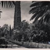 Сочи. Дендрарий. Аллея верхней террасы, 1949 год