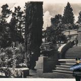 Сочи. Дендрарий. Часть главной террасы с кипарисами, 1940 год