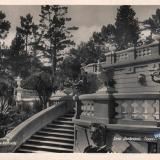 Сочи. Дендрарий. Терраса с петухом, 1938 год