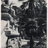 Сочи. Дендрарий.Вид с террасы, 1954 год
