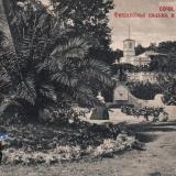 Сочи. Финиковая пальма и дача Худекова, до 1917 года