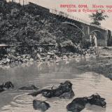 Сочи. Мост через р. Сочи и буйволы в луже, до 1917 года