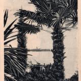 Сочи. Пальмы в Ривьере, около 1913 года