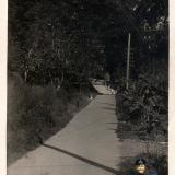 Сочи. Строительство автомагистрали Сочи-Мацеста. Пешеходная тропа. 1935 год