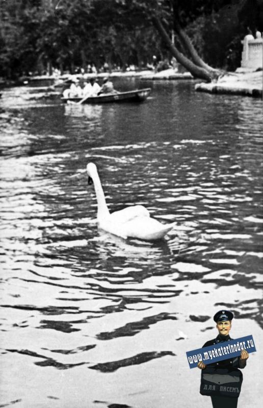 Краснодар. Лебеди на пруду городского парка им. А. М. Горького, середина 60-х