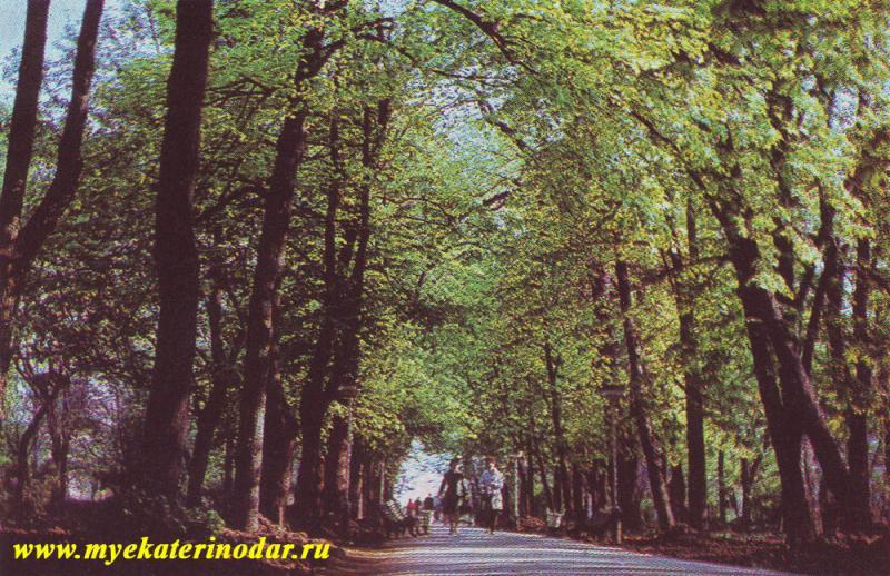 Краснодар. Бульвар на улице Красной, 1975 год.
