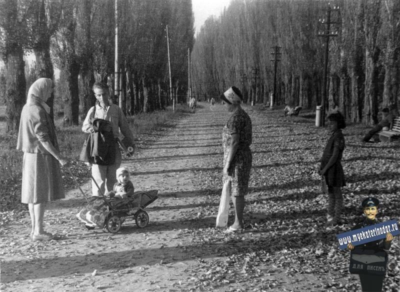 Краснодар, Аллея в парке 40-летия Октября, 1963 год