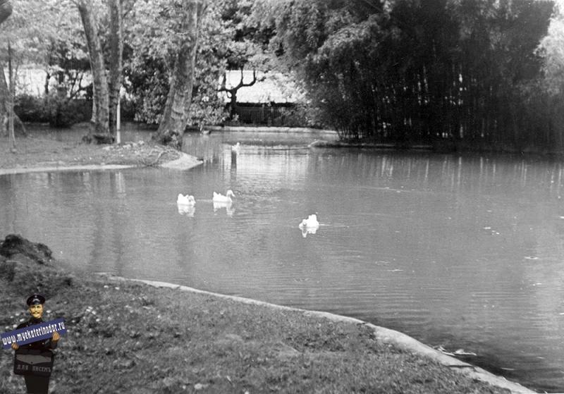 Краснодар. Большой пруд в Горпарке, 1970-е годы