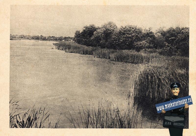 Краснодар. Камышевые заросли на реке Кубань. 30-е годы.