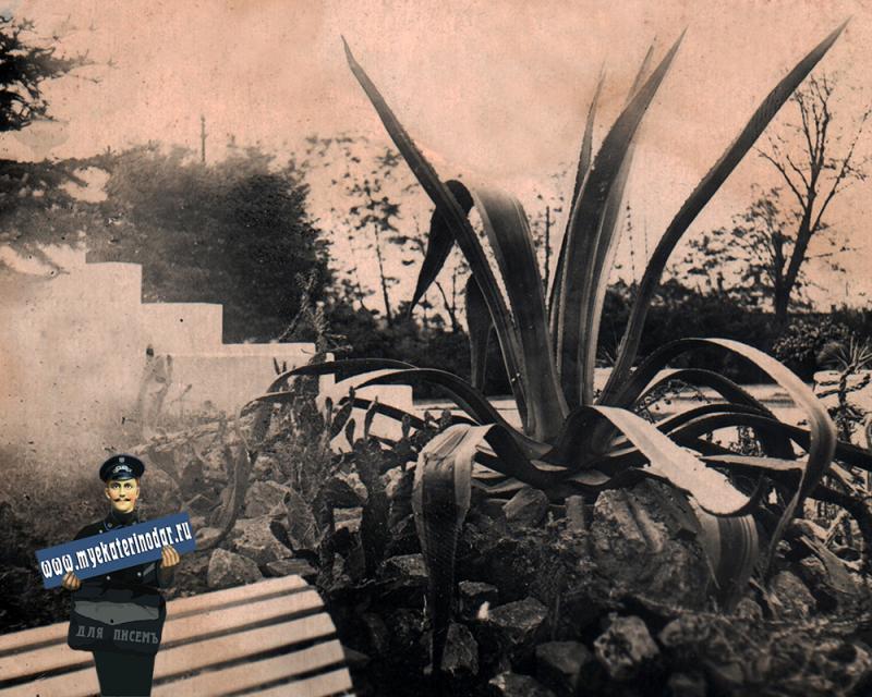 Краснодар. Парк культуры и отдыха им. М. Горького. Тропические растения. 13.05.1938