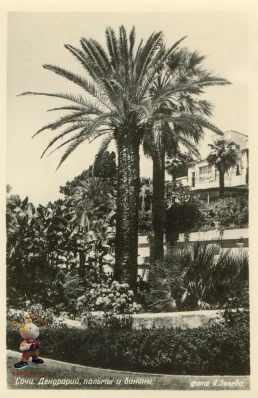 Сочи. Дендрарий, 1954 год.