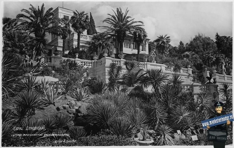 Сочи. Дендрарий, уголок мексиканской растительности.