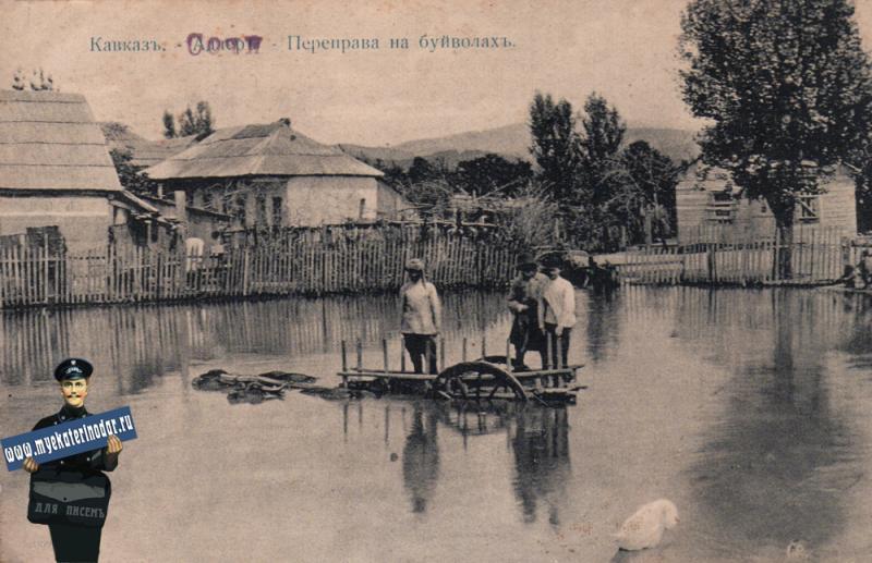 Кавказ. Сочи. Переправа на буйволах, до 1917 года