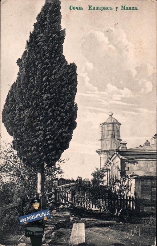 Сочи. Кипарис у Маяка, около 1913 года