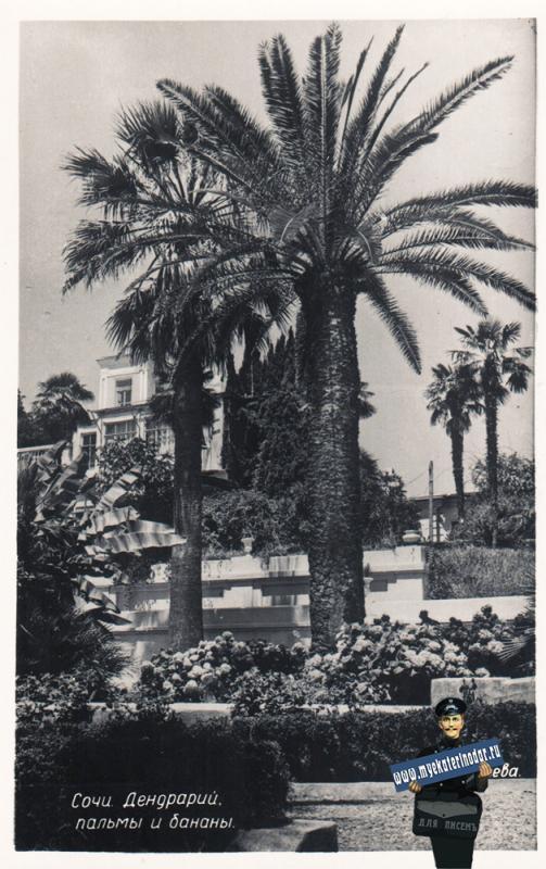 Сочи. Пальмы и бананы, 1955 год