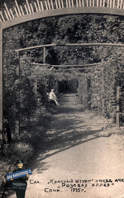 """Хоста. Санаторий """"Красный штурм"""" УНКВ АЧК. """"Розовая аллея"""", 1935 год"""