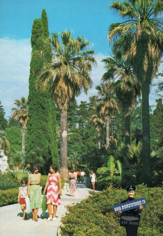 Сочи. Уголок Дендрария, 1981 год